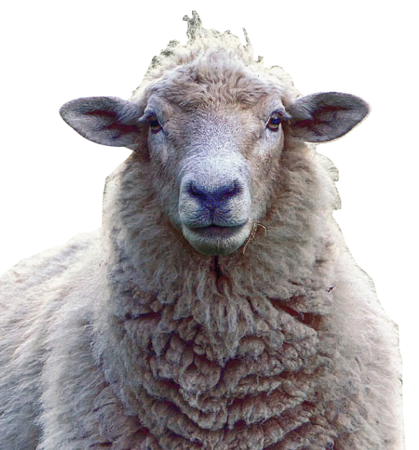 Mega Shinnosuke - sheep